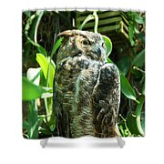 Owl Portrait 2 Shower Curtain