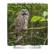 Up - Owl Shower Curtain