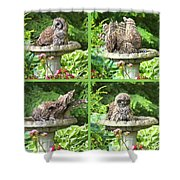 Owls Do Take Baths Shower Curtain