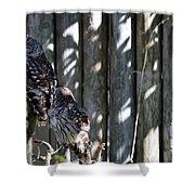 Owls Shower Curtain