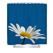 Oxeye Shower Curtain