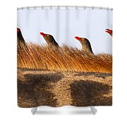 Oxpeckers Shower Curtain