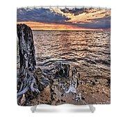 Oyster Bay Stump Sunset Shower Curtain