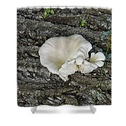 Oyster Mushroom Shower Curtain