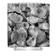 Oyster Shells Shower Curtain