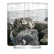 Oysters On The Rocks Shower Curtain
