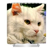 P C - Perfect Cat Shower Curtain