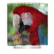 P Is For Parrot Shower Curtain