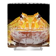 Pac Man Frog Ceratophrys On A Rock Shower Curtain