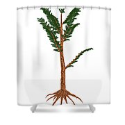Pachypteris Prehistoric Plant Shower Curtain