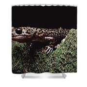 Pacific Giant Salamander On Mossy Rock Shower Curtain