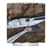 Pacific Needlefish Shower Curtain by Aged Pixel