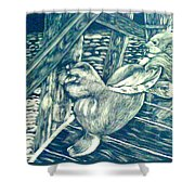 Pacific Sea Lions Shower Curtain