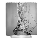 Pacific Sea Nettle - Black And White Shower Curtain