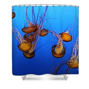 Pacific Sea Nettles Shower Curtain