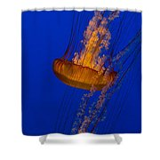 Pacific Sea Nettles In A Row Shower Curtain
