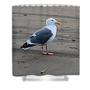 Pacific Seagull Shower Curtain