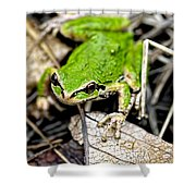 Pacific Tree Frog 2a Shower Curtain