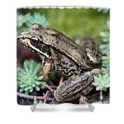 Pacific Tree Frog Among Succulent Plant Shower Curtain by David Gn