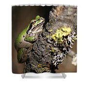 Pacific Treefrog Shower Curtain