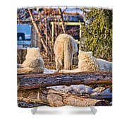 Pack Of Arctic Wolves Watching A Polar Bear Movie Shower Curtain