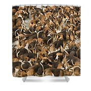 Pack Of Hound Dogs Shower Curtain
