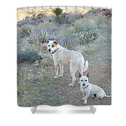 Paco And Mocha Shower Curtain