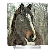 Paint Horse In Winter Shower Curtain