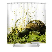 Paint Sculpture And Snail 2 Shower Curtain