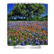 Paintbrush And Bluebonnets - Fs000057 Shower Curtain by Daniel Dempster