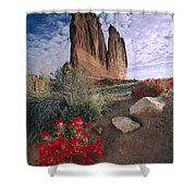 Paintbrush And  Organ Rock Shower Curtain