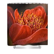 Paintbrush Lily Shower Curtain