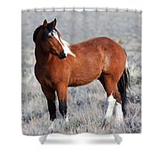 Painted Apache Shower Curtain