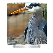 Painted Blue Heron Shower Curtain