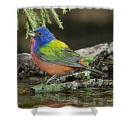 Painted Bunting Drinking Shower Curtain