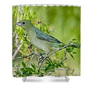 Painted Bunting Hen Shower Curtain