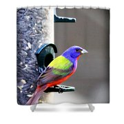 Painted Bunting - Img_9756-004 Shower Curtain