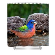 Painted Bunting Passerina Ciris In Water Shower Curtain