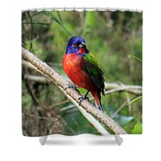 Painted Bunting Photo Shower Curtain