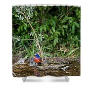 Painted Buntings Bathing Shower Curtain