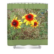 Painted Daisies Shower Curtain