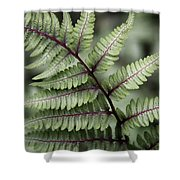 Painted Fern Shower Curtain
