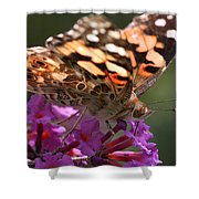 Painted Lady On Butterfly Bush Shower Curtain by William Selander