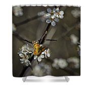 Painted Lady On Wild Plum Shower Curtain