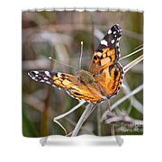 Painted Lady Square Shower Curtain