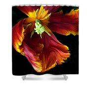 Painted Parrot Petals Shower Curtain