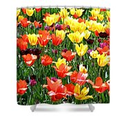 Painted Sunlit Tulips Shower Curtain