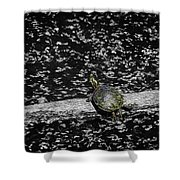 Painted Turtle In A Monochrome World Shower Curtain