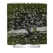 Painted Turtle Sleeping Like A Log Shower Curtain