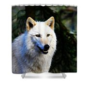 Painted White Wolf Shower Curtain
